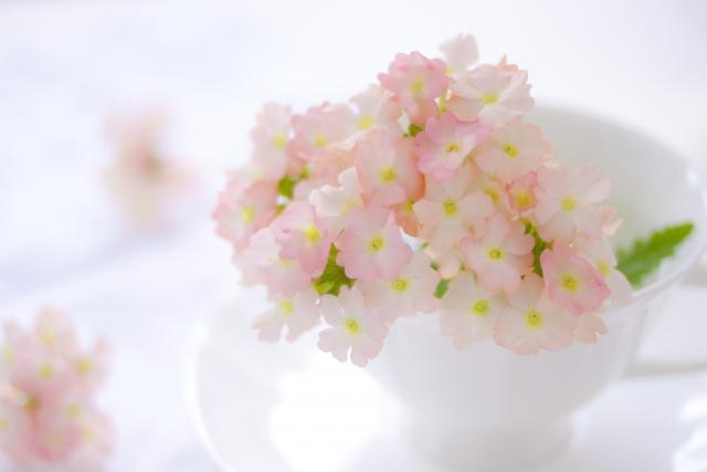 ピンクの薄い色の花がほっこりと咲いている写真